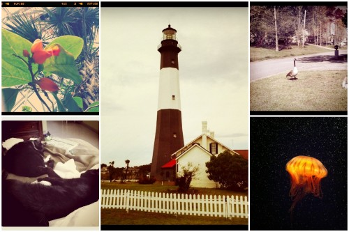 Collage of Tybee Island, Tennessee Aquarium, and personal photos